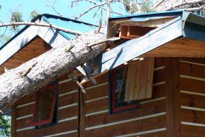 sundew storm damage 003